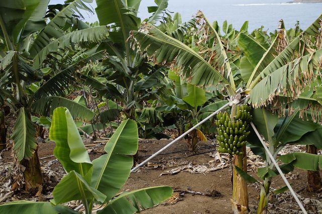 Pestizide werden zum Abhalten von Schädlingen genutzt. Nur leider schädigen sie auch die Umwelt und Gesundheit des Menschen.