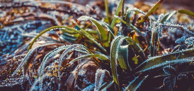 Frost, Winter
