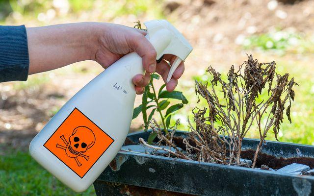 Garten-Fehler: Pestizide = Unkrautvernichter, Schneckenkorn,...