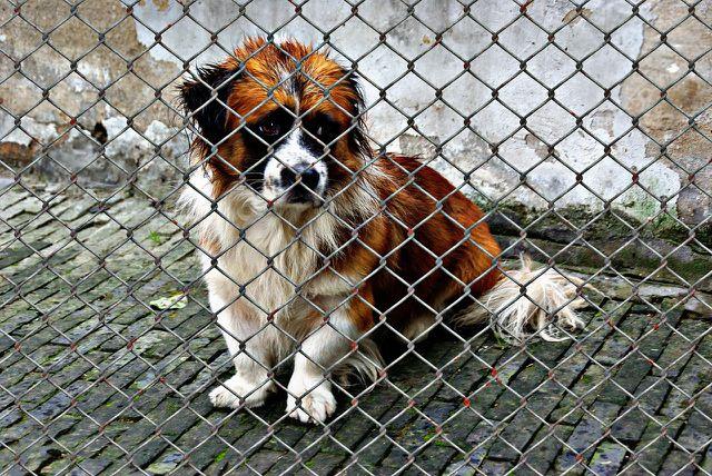 Du kannst für bestehende Organisationen wie beispielsweise Tierschutzorganisationen Spenden sammeln.