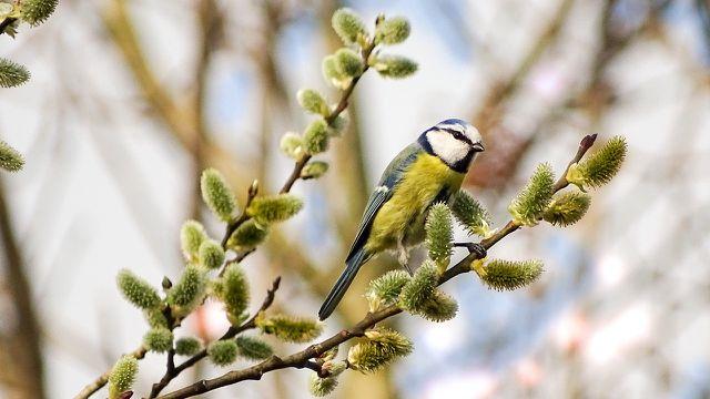 Eine abwechslungsreiche Bepflanzung bietet Vögeln Nahrung.