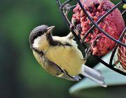 Vögel füttern Tipps für Winter und Sommer