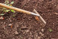 Die Erde im Rosenkohlbeet solltest du regelmäßig harken und von Unkraut befreien