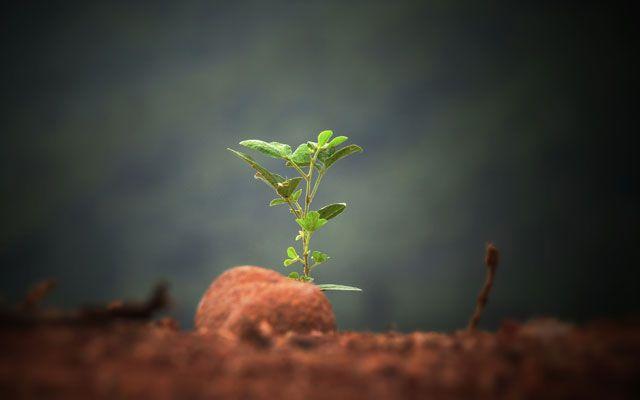 Trillion Tree Campaign Techniker Krankenkasse Plant for the Planet