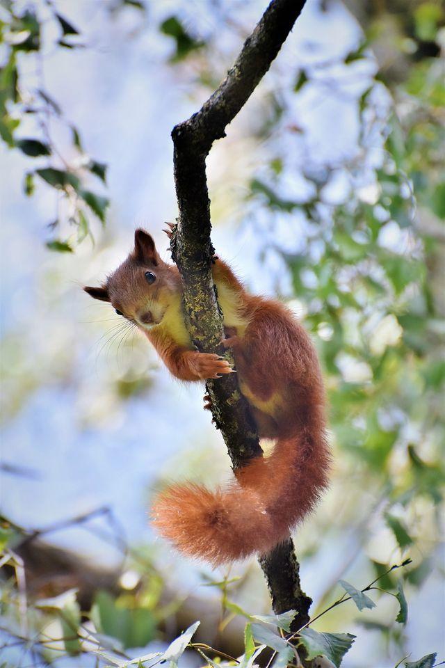 Was fressen Eichhörnchen?