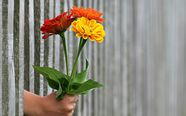 we have compiled a list of 10 eco-friendly tips you can do easily at home to help make your fresh cut flowers last longer