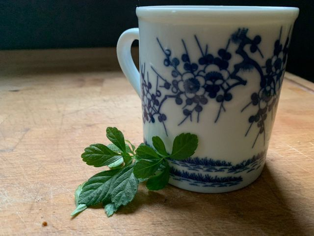Jiaogulan Tee schmeckt gut und ist einfach zuzubereiten.