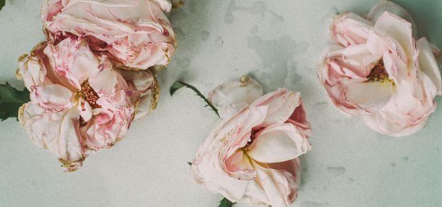 Blumen Trocknen Einfache Methoden Für Den Blumenstrauß Oder Blüten
