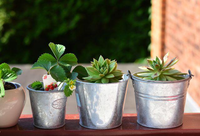 Damit Hängeerdbeeren gut wachsen, solltest du sie in einen Topf pflanzen, der mindestens 25 Zentimeter breit ist.