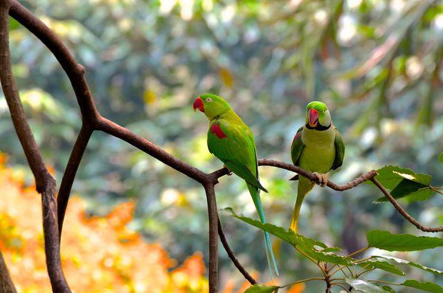 Den Regenwald vor Abholzung zu schützen heißt auch, das Klima und die Artenvielfalt zu retten.
