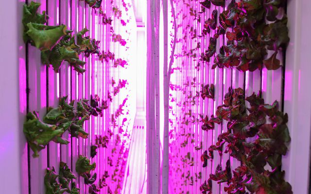 Vertical-Farming-Bild-von-Freight-Farms-LED