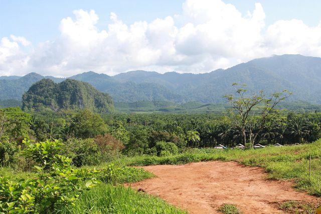 Die Neue Seidenstraße würde die Urwälder in Südostasien gefährden.