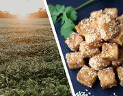 Woher kommt Soja für Tofu und Drinks?