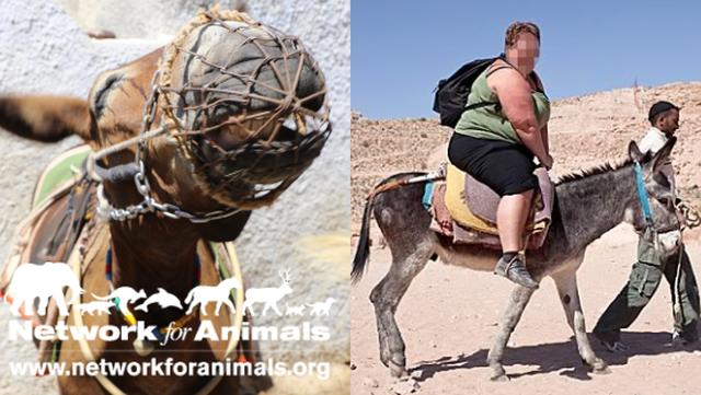 Esel reiten Touristenattraktion Tiere leiden