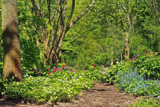 Wildstauden wachsen in freier Natur häufig in leicht feuchten Böden, wie am Waldrand. Im Garten muss ein solcher feuchter Standort erst geschaffen werden.