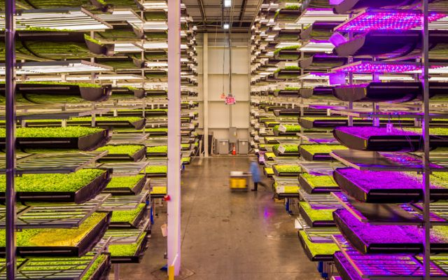 vertical farms sustainability