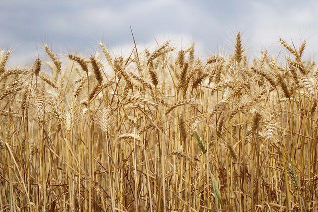 Für den Anbau von Futtermittel-Pflanzen werden immer mehr wilde Gras- und Waldflächen landwirtschaftlich erschlossen.