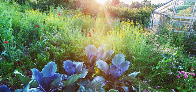 Bauerngarten 10 Tipps Wie Du Alles Richtig Machst
