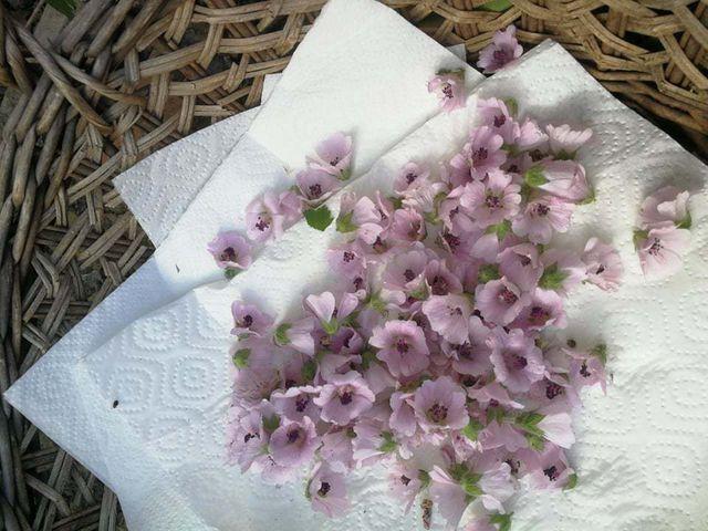 Die Blüten von Eibisch kannst du über den Sommer sammeln und trocknen.