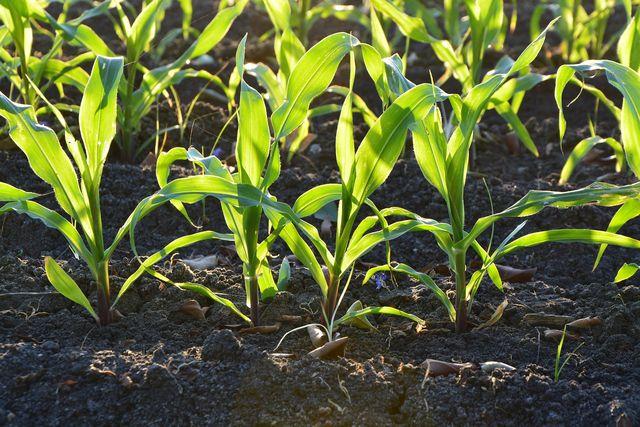 Ein gutes Bodenmilieu sorgt für gesundes Wachstum