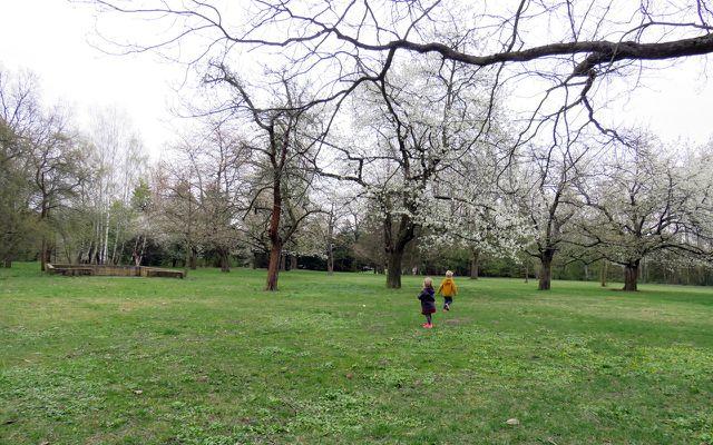 Spiele für draußen, Spiele für Kinder, Obstbäume