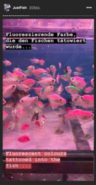 Instagram-Story: Tätowierte Fische