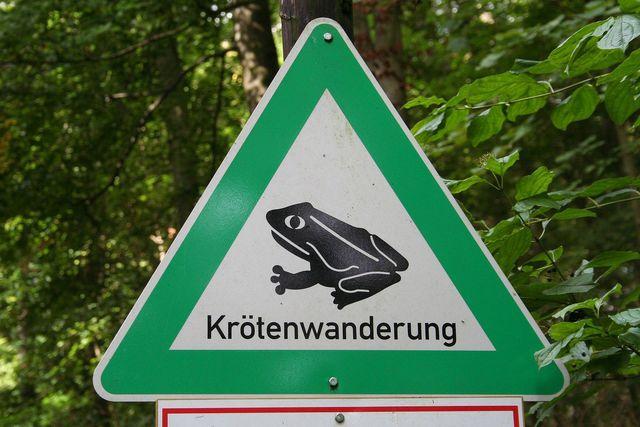 Wenn die Krötenwanderung beginnt, ist für Autofahrer*innen äußerste Vorsicht geboten.
