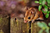 Strenge Gerüche wie von Essig helfen Mäuse zu vertreiben.