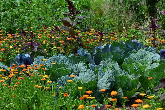 Doku Gift im Garten: Chemikalien sind unnötig