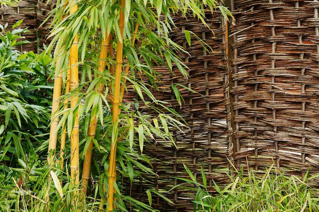 Damit die Wurzelsperre zum Beispiel den kräftigen Ausläufern von Bambus Stand hält, muss sie sehr fest sein.