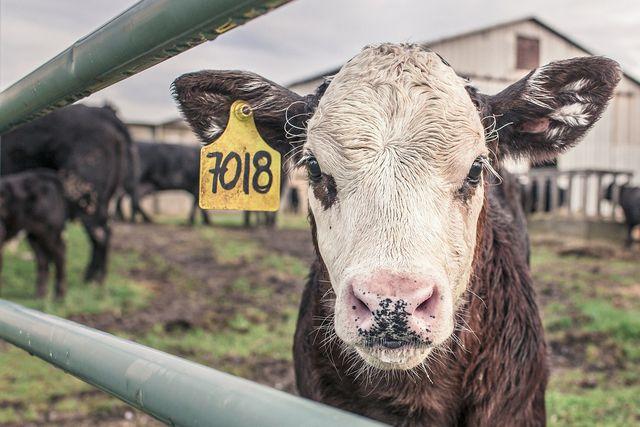 Achte darauf, woher deine Milch kommt.