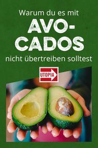 Avocado: super-gesund, aber super-problematisch