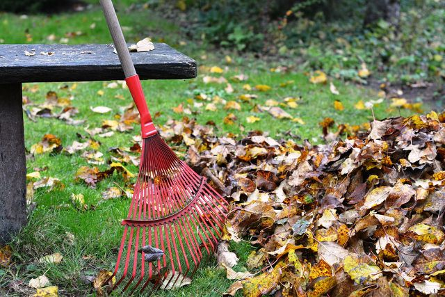 Gegen Engerlinge: Bearbeite deinen Boden