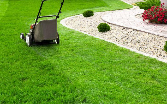 Garten Fehler: zu sauber, Rasen