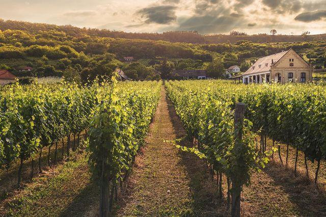 Einige Weingüter setzen sich für gute Arbeitsbedingungen ein.