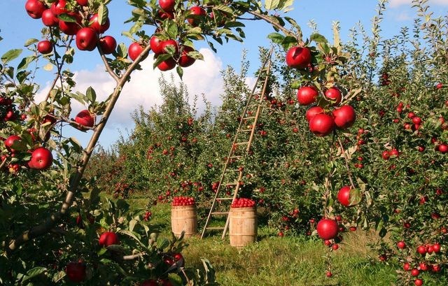 Das Landleben hat vor allem eines zu bieten: Wunderschöne Naturlandschaften und regionale Lebensmittel.