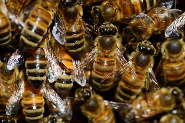 Du solltest deine Bienen zu einem festen Zeitraum im Jahr füttern.