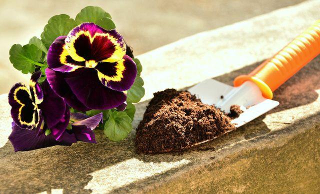 Auf für Blumenbeete ist Terra Preta ideal.