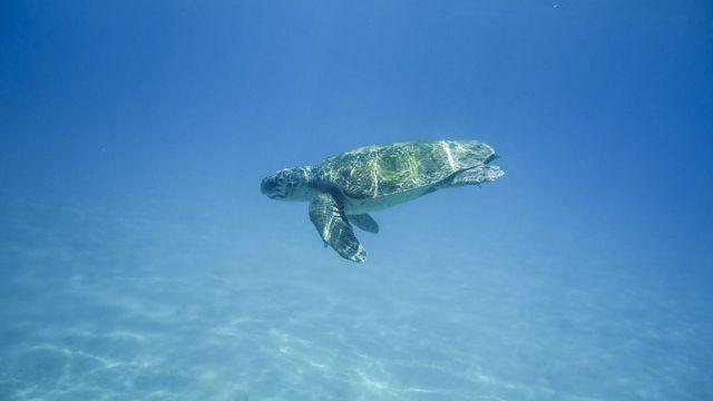 Wasserschildkröten verfangen sich in den Geisternetzen.