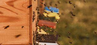 imkern stadt bienen
