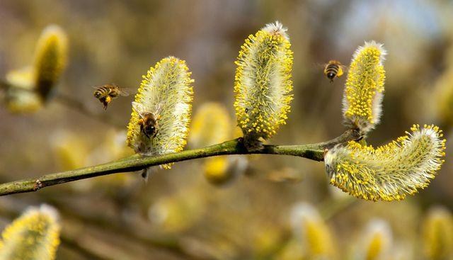 Fruhbluher Diese Pflanzen Und Straucher Bluhen Als Erstes Utopia De