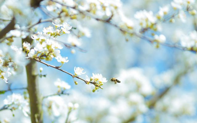 almonds and the bee problem