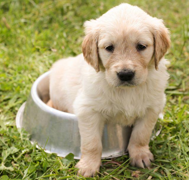 Hundefutter bio