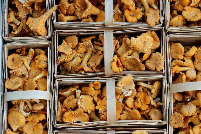 Wenn du viele Pfifferlinge im Wald gesammelt hast, kannst du überschüssige Pilze einfach einfrieren.