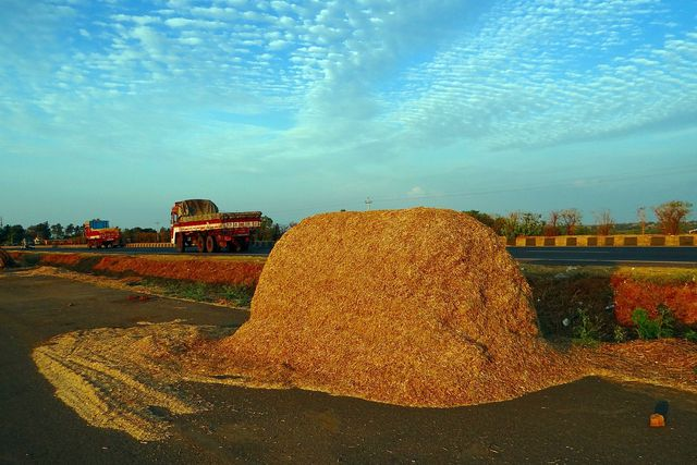 Bagasse fällt bei der Zuckerherstellung als Nebenprodukt an.