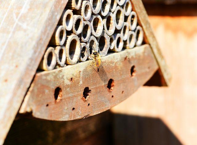 Mit künstlichen Nisthilfen kannst du Bienenarten wie die Mauerbiene unterstützen.
