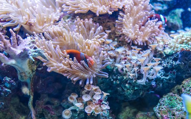 physical sunscreen or zinc oxide sunscreen is less damaging for corals