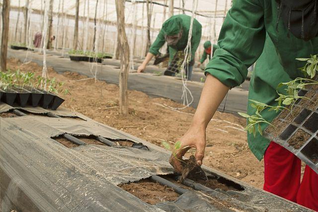 Die Regionalwert AG schafft Arbeitsplätze in der Bio-Landwirtschaft.