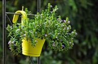 Hängende Übertöpfe schaffen zusätzlichen Platz für Pflanzen.