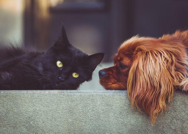 Auch bei Katzen kann Kokosöl angewandt werden.